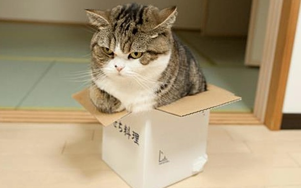 maru-in-a-box
